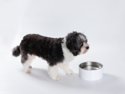 32oz/960ml Sublimation Blank Stainless Steel Dog Bowl (White)