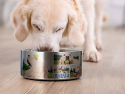64oz/1900ml Stainless Steel Dog Bowl (Silver)